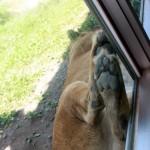伊豆アニマルキングダムの動物達 2013夏。