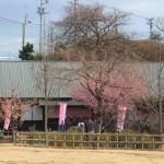2月24日稲取の様子