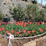 稲取文化公園、たくさんの花が咲いています!